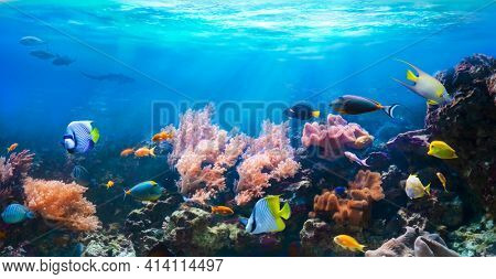 Animals of the underwater sea world. Corals and tropical fish in coastal waters. Life in a coral reef. Ecosystem.