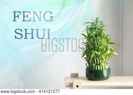 Green Bamboo In Pot On Wooden Stand. Feng Shui Philosophy