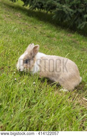 Portrait Of A Cute Cream Brown Rabbit With Beautiful Eyes