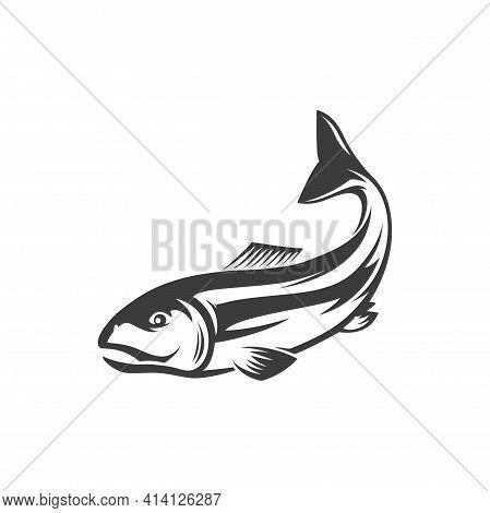 Fish Underwater Animal, Salmon Fishing Sport Mascot Isolated Monochrome Icon. Vector Salmon Grayling