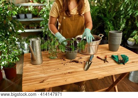 Girl Working At The Table With Plants On The Table. Gardener Standing At The Table And Making Seedli