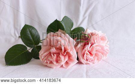 Spring, Summer Still Life Scene. Vintage Wedding Feminine Styled Photo, Floral Composition. Bouquet
