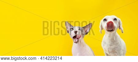 Banner Two Funny Hungry Pets, Dog And Sphynx Cat Licking Its Lips. Isolated On Yellow Backgorund.