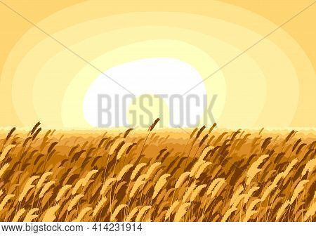 Wheat Field Scenic Tranquil And Calm Landscape Vector Illustration, Forget About All The Problems An