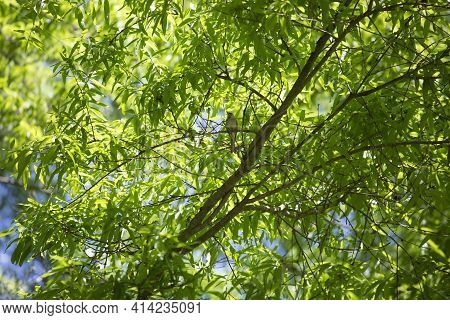 Sparrow Majestically Perched On A Tree Branch Among Bright Green Leaves