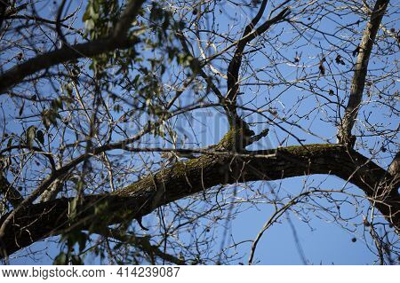 Squirrel Leaping Along A Tree Branch On A Cool Day