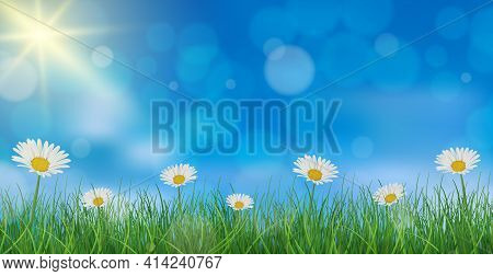 Chamomile On A Background Of Blue Sky And Green Grass - Vector Illustration