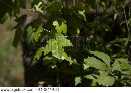 Green, Leafy Plants Growing In A Flower Bed