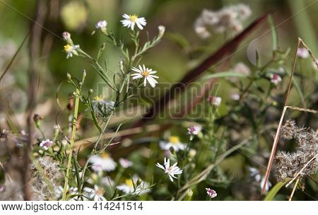 Bouquet Of Daisies Growing In A Field In The Autumn