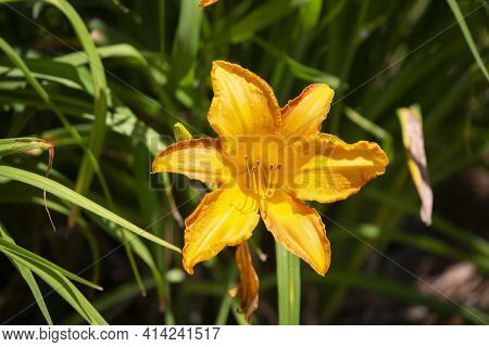 Bright Yellow Flower With Green Grass And Foliage In The Background