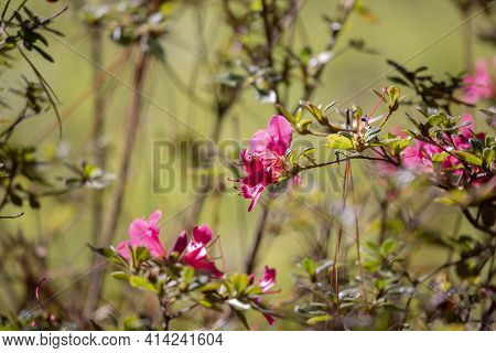 Blooms On A Pink Flower In A Meadow