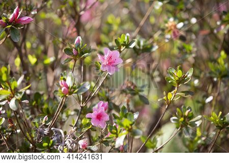 Pink Flowers Blooming On A Bright, Warm Day