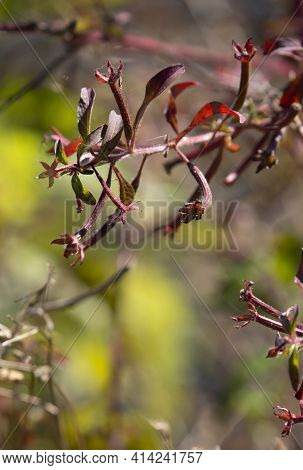 Close Up Of Red Blooms On A Tree In Autumn