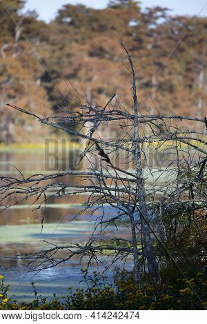 Fall Foliage Blocking An Out Of Focus Swampy Lake And Lake Shore