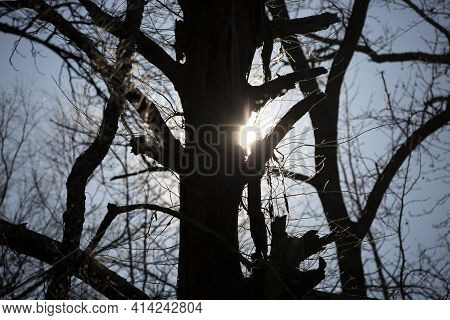 Pure Light Shining Through A Dark, Decaying Tree