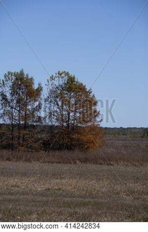 Small Grove Of Trees In A Meadow Filled With Dead And Drying Grass