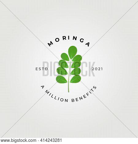 Moringa Oleifera , Miracle Tree Logo Vector Illustration Design, Natural Medical , A Million Benefit