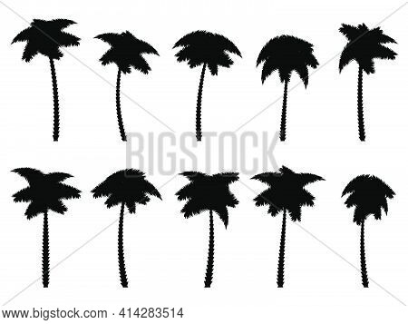 Black Palm Trees Set Isolated On White Background. Palm Silhouettes. Design Of Palm Trees For Poster
