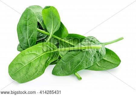 Spinach Leaves Isolated On White Background. Various Spinach Leaf