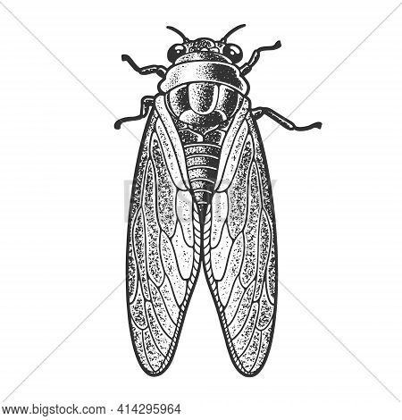 Cicadidae Cicada Insect Animal Sketch Engraving Vector Illustration. T-shirt Apparel Print Design. S