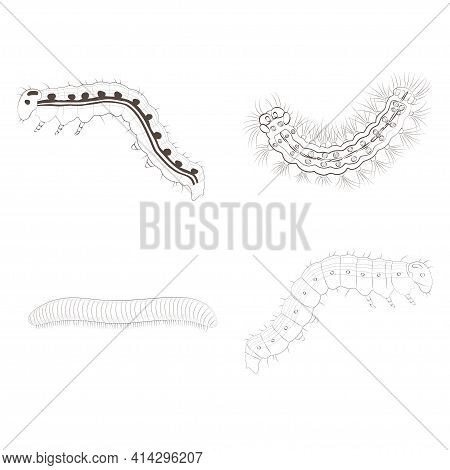 Set With Insects Isolated On White Background. Cydalima Perspectalis, Wax Moth, Silkworm Caterpillar
