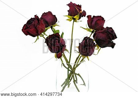 Dry Roses In A Glass Vase On A White Background. Dried Flowers In A Glass. Herbarium, A Bouquet Of D