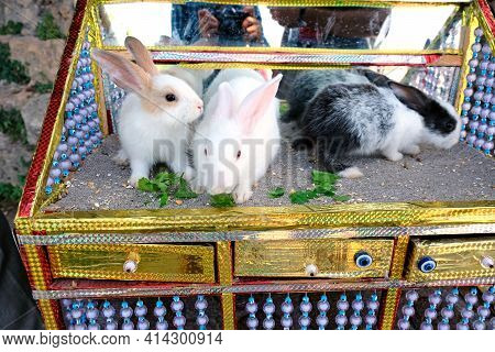 Three Rabbits On The Table Are Eating Greens. In Turkey, Rabbits For Cute Photos. Domestic Rabbits,