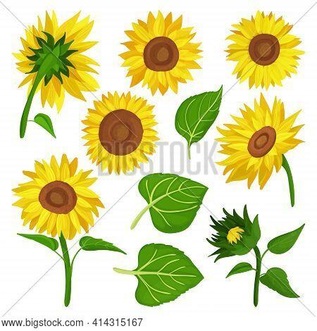 Sunflower Isolated Cartoon Set Icon.vector Illustration Illustration Flower On White Background .car