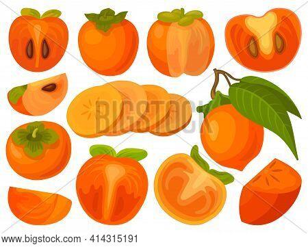 Persimmon Vector Illustration On White Background. Isolated Cartoon Set Icon Fruit. Vector Cartoon S