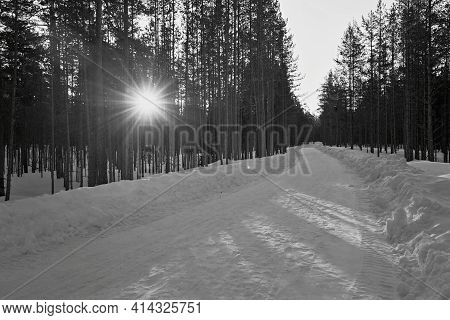 Morning Landscape Of Pine Forest With Sunrise Between Tree Trunks And Snowy Road