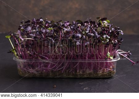 Fresh Microgreens. Close-up Of Red Amaranth Microgreens - Purple Leaves And Stems. Germination Of Mi