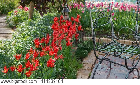 Red tulips flower in the garden a place of rest