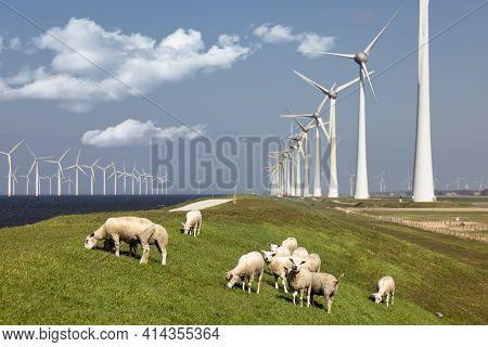 Dutch Dike Along Ijsselmeer With Wind Turbines And Herd Of Sheep