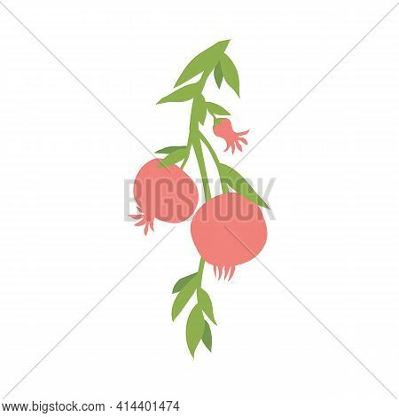 Fruit Pomegranate Branch, Illustration Isolated On White Background. Hand Drawn Pomegranate Hanging