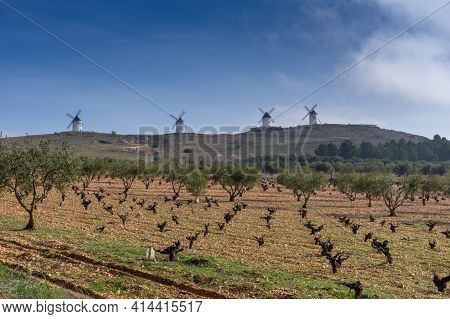 Barren Grapevines In A Vineyard In La Mancha With Whitewashed Windmills In The Background