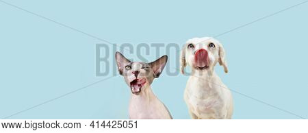 Banner Two Hingry Hungry Pets, Sphynx Cat And Dog Licking Its Lips. Isolated On Blue Pastel Backgoru