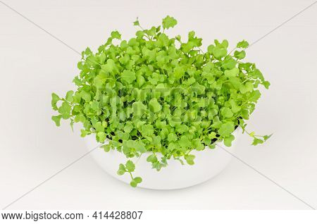 Kale Microgreens In A White Bowl. Growing Green Shoots Of Leaf Cabbage, Seedlings And Young Plants.
