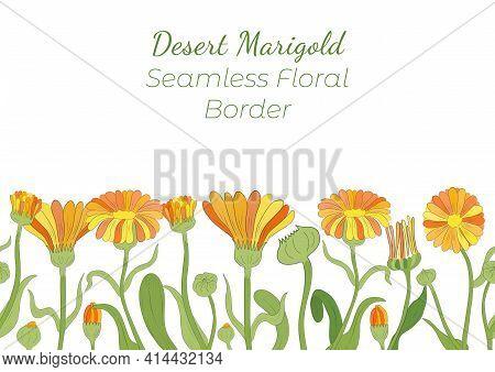 Seamless Border Made With Hand Drawn Desert Marigold Arranged Horizontally. Multicolored Tagetes Bra