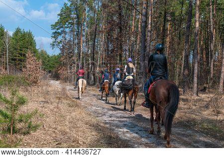 Horseback riding. Horseback riding in the forest.