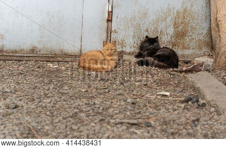 Two Stray Cats Lie On The Street Near The Garage