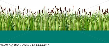 Vector Reed And Cattail Plants In The Lake Or Swamp Water Seamless Pattern. Flat Vector Illustration