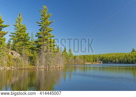 White Pines And Calm Waters On Annie Lake In The Boundary Waters In Minnesota