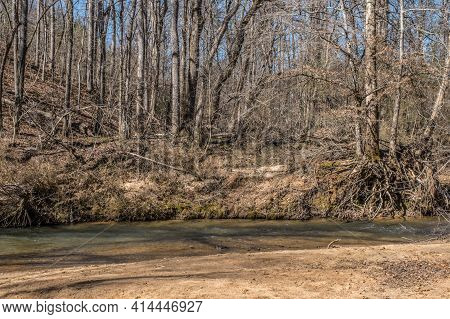 Exposed Roots And Bare Trees In The Woodlands Going Up A Hillside With A Flowing Creek Alongside Wit