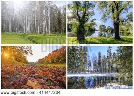 Collage All Seasons . Winter, Spring, Summer, Autumn. Landscapes Of The Seasons Different Seasons