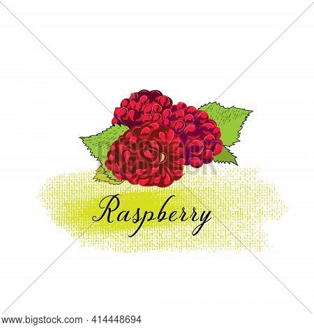 Vector Simple Isolated Image Of A Raspberry. Sketch Of An Illustration Of A Fresh Berry