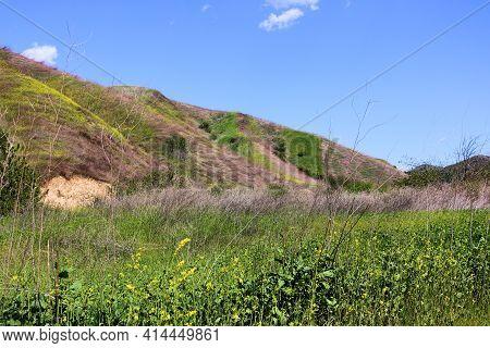 Windswept Grasslands And Wildflowers During Spring Besides Rural Hills On Badlands Taken At A Prairi