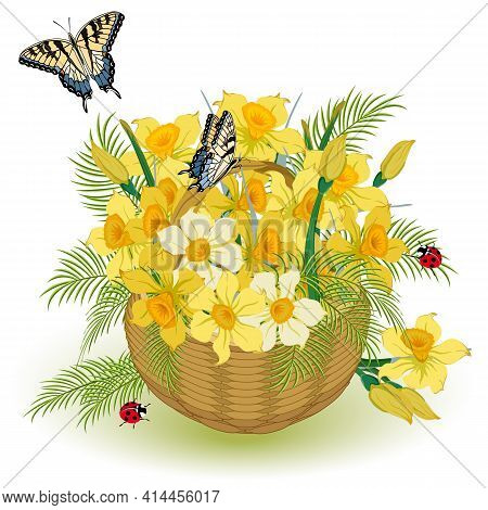 Illustration With Daffodils In A Basket.basket With A Bouquet Of Daffodils And Butterflies In Vector