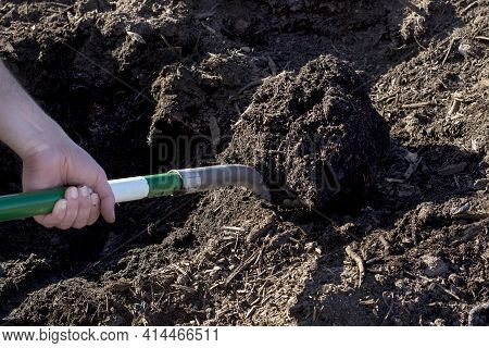 Man With Shovel Digging Garden Bed. Farmer, Worker Man Digging Soil.