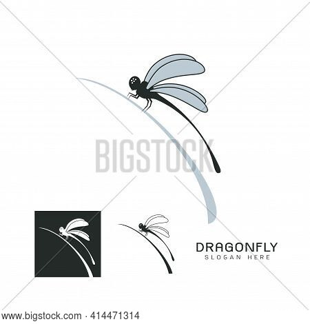 Set Of Beautiful Logo Icon Dragonfly,stylized Image Of Dragonfly On Leaf Logo Template,dragonfly Tat