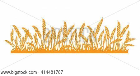 Wheat Field. Spikelets Of Golden Wheat, Rye, Barley On A White Background. Vector